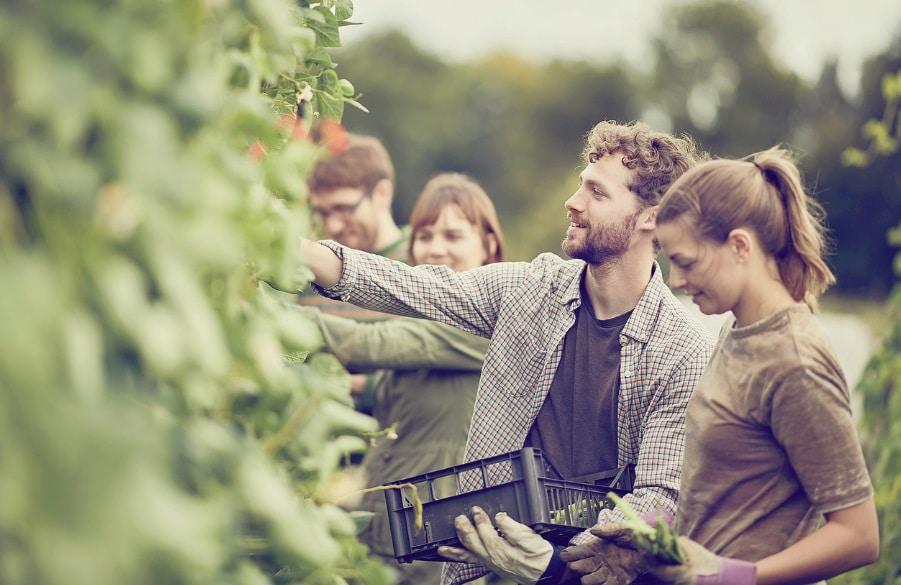Personnes récoltant des légumes